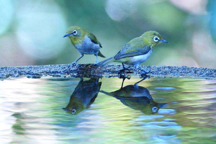 分身する鳥